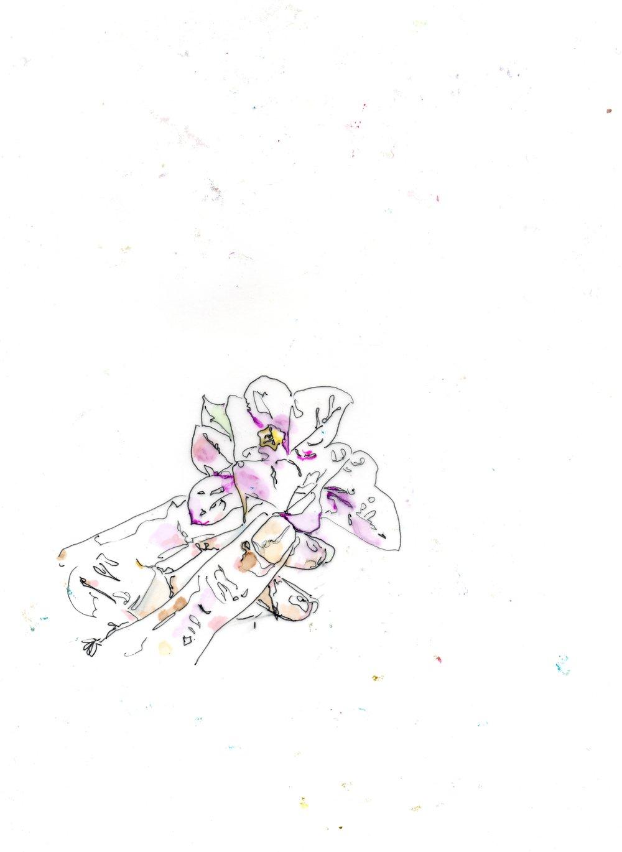 Illustration by Stephanie K Kane