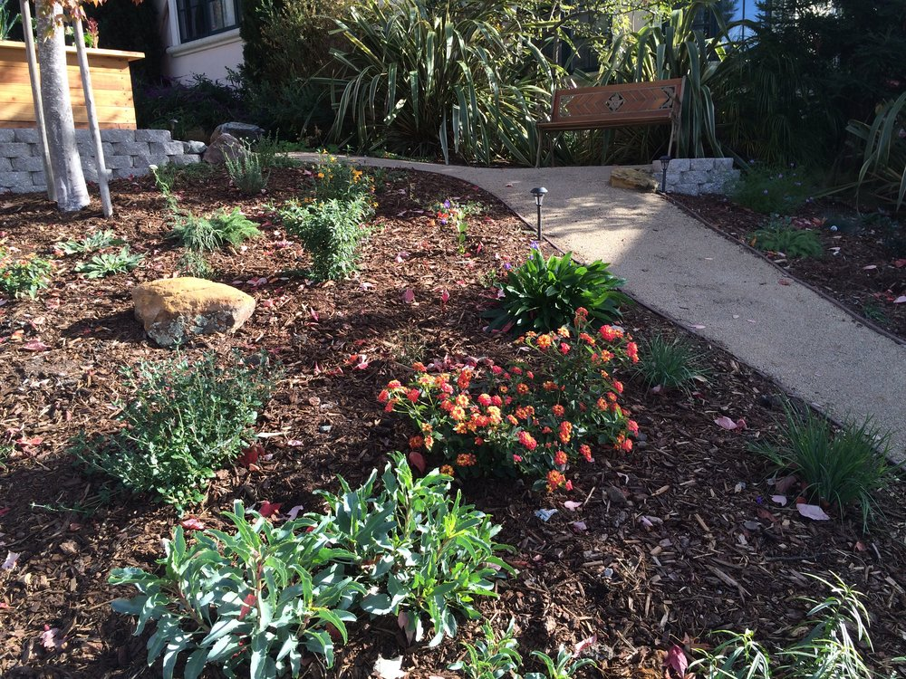 At a home in the Oakland Hills, we completely removed a 1000 sq ftlawn, and replaced it with pathways, terraces, benches, vegetable beds, potted herbs, and a drought-tolerant and native planting. The install was completed with drip-irrigation and a topper of rich mulch. The vegetable beds are planted with seasonally appropriate crops and are regularly harvested and maintained