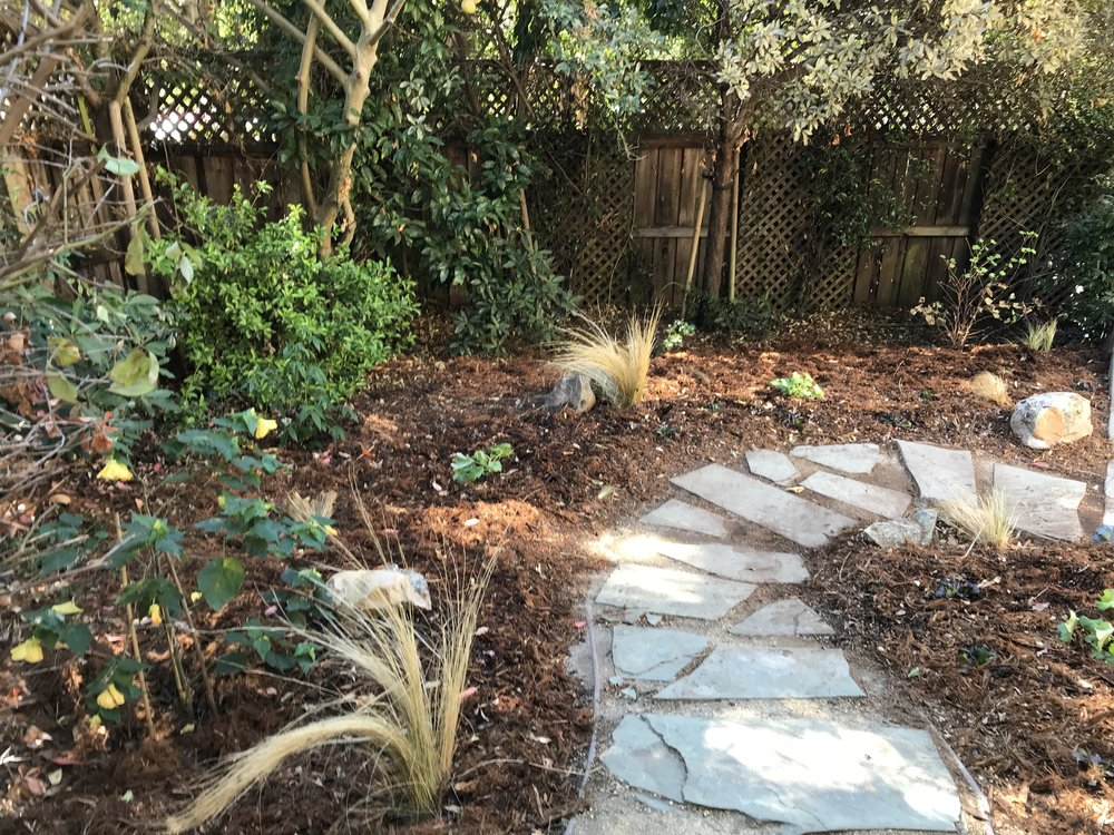 This backyard was a steep slope in deep shade. The client wanted to resurrect a Buddha sculpture that was hidden behind an overgrown shrub by bringing it forward. Lauren planted around the Buddha and slope to create a lovely new space. BWG also refreshed the pathway by bringing in golden decomposed granite and laying slate stone on top for an elegant look. The result is a transformed backyard that the client can enjoy for years to come.