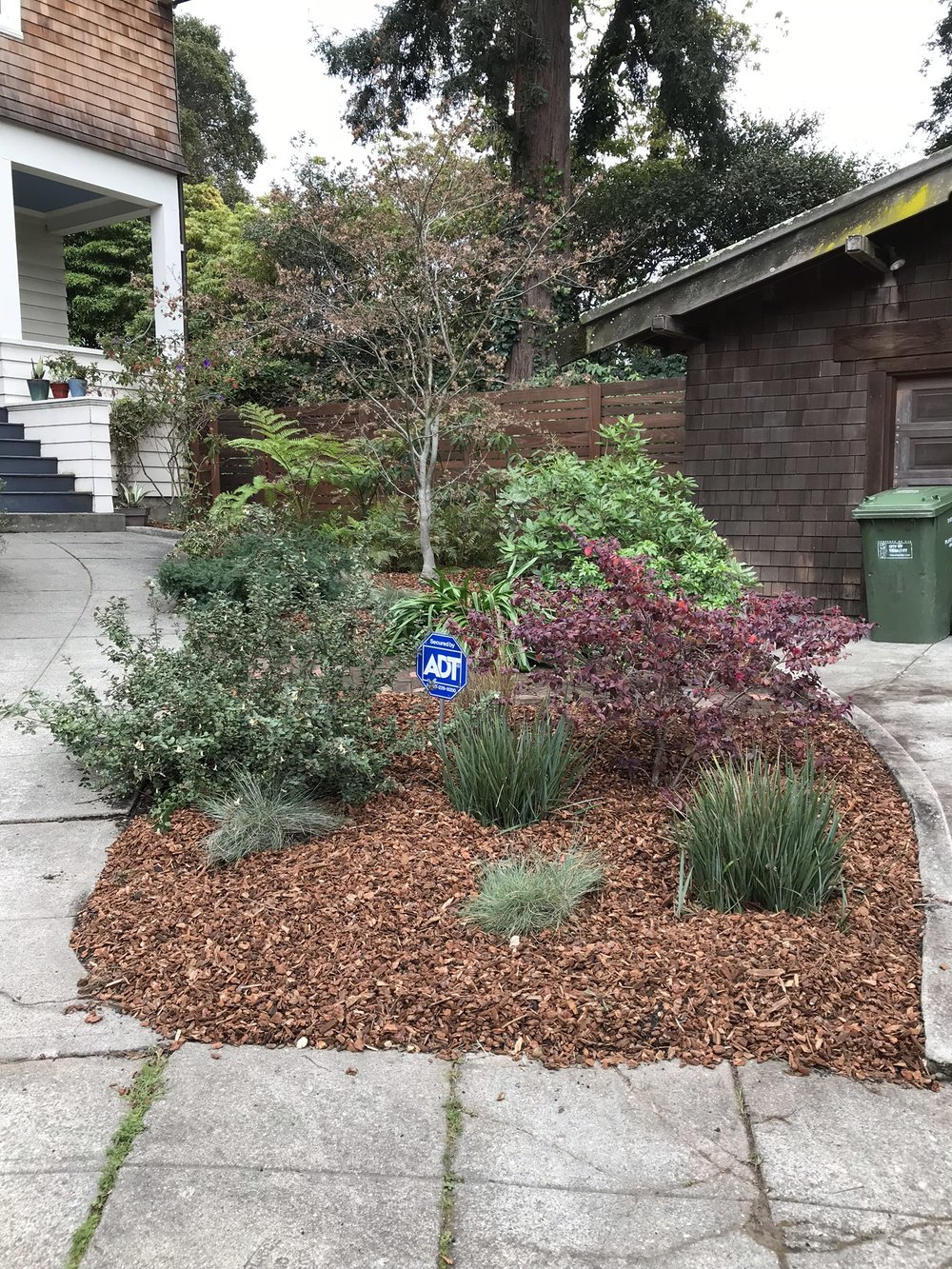 A yard covered in weeds transformed with a little attention. We removed the weeds and added compost and mulch. The existing plants really shine now that they are not stifled by overgrowth. The compost will enrich the soil to keep the plants happy and the mulch will help to retain moisture.