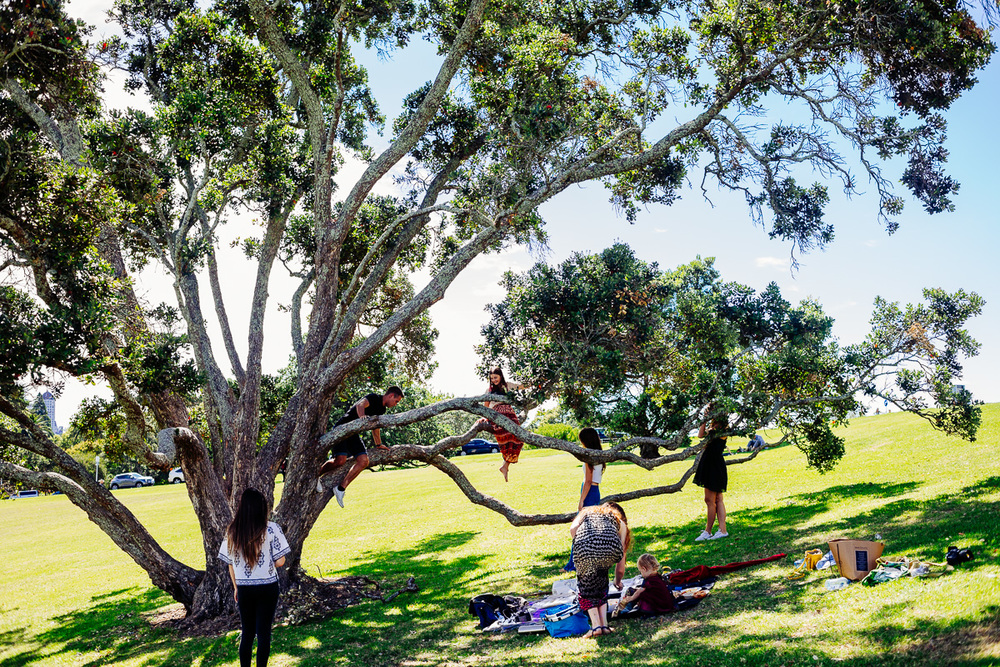 plant love picnic auckland domain new zealand nirrimi photography