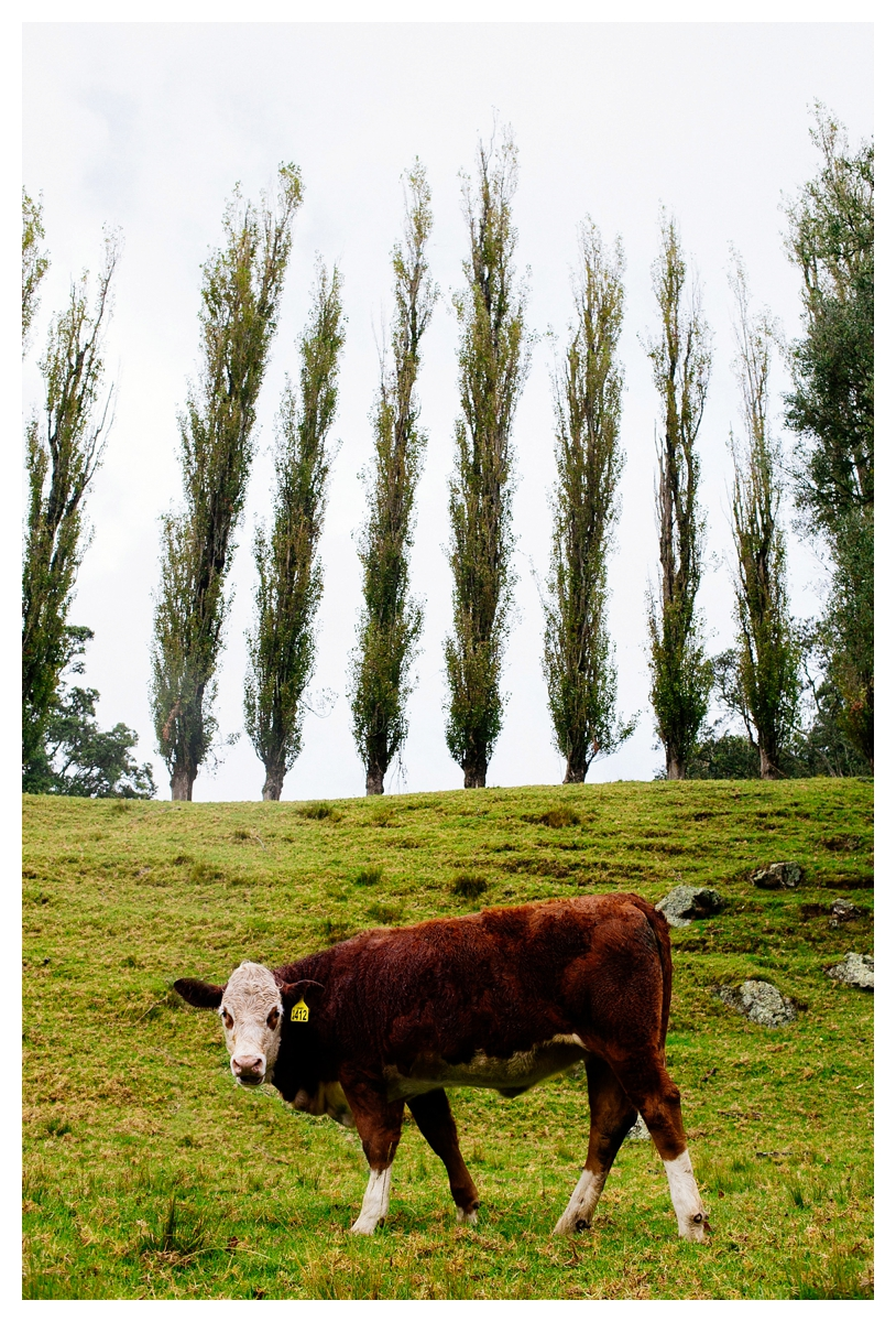 ellen richardson dawn chapman photography auckland, rainy portraits cornwall park cows vsco film