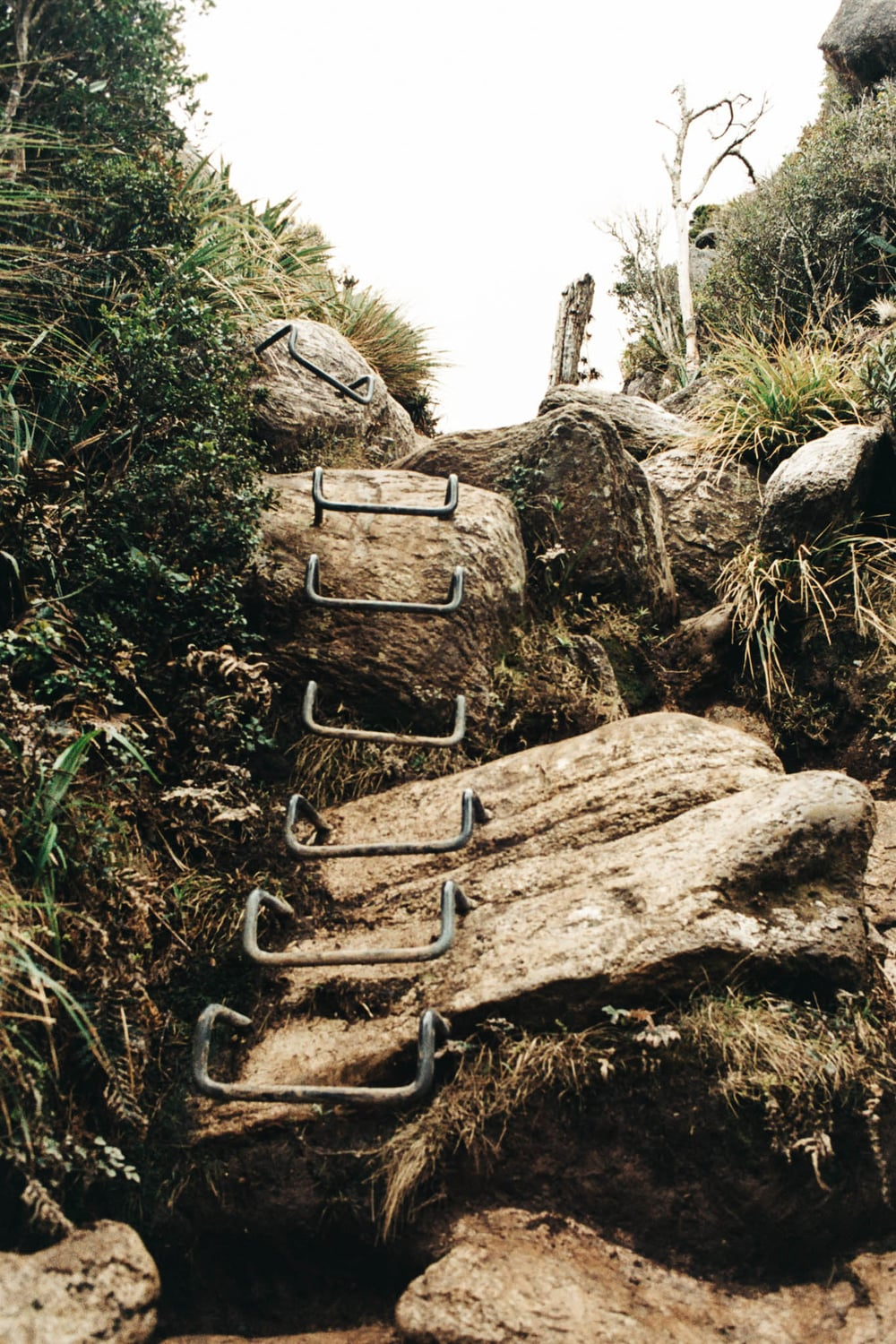 Metal rungs to climb the rocks