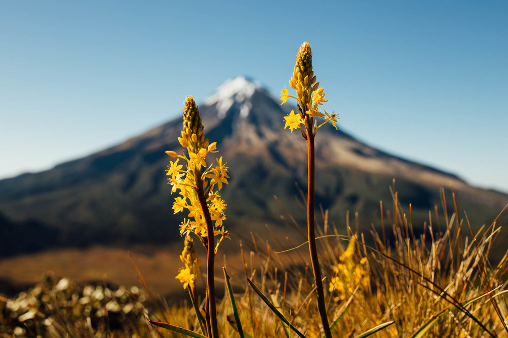 Ellen Richardson - Travel - Mt Taranaki-55.jpg