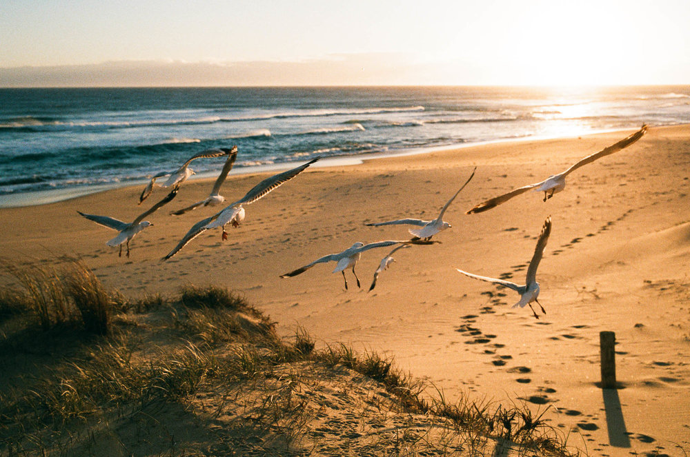 Seagulls at Gunnamatta Beach
