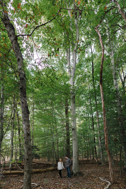 brenizer-method-woods-trees.jpg