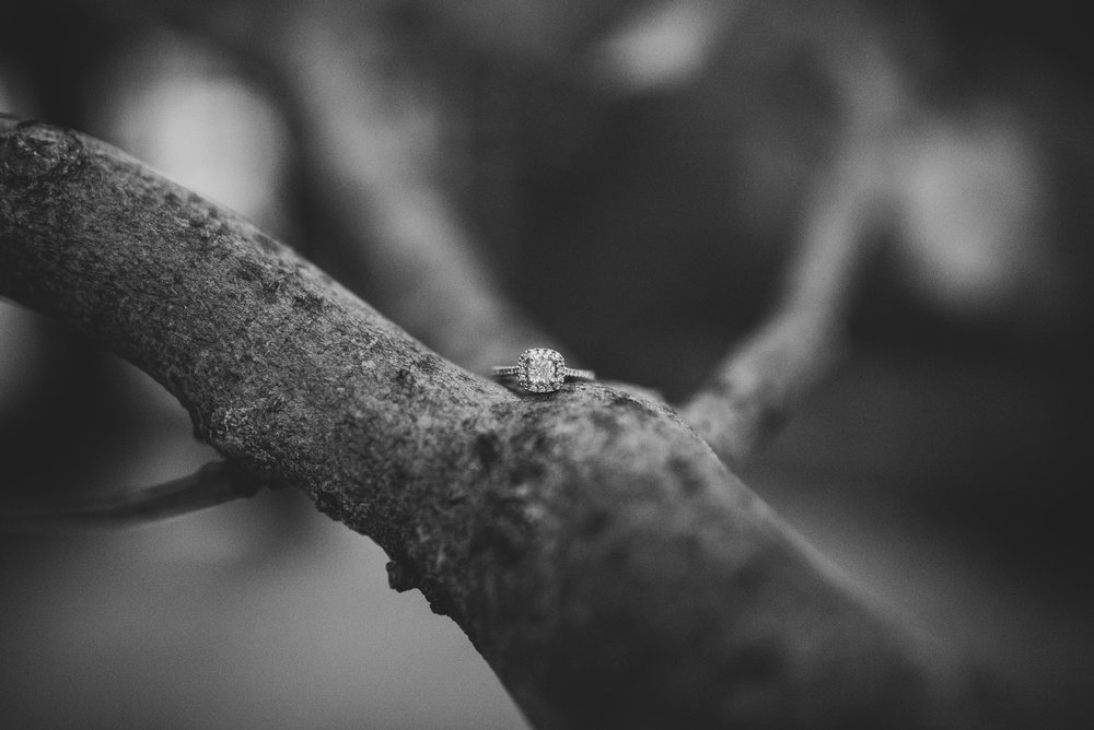 engagement ring in black and white amongst the branches
