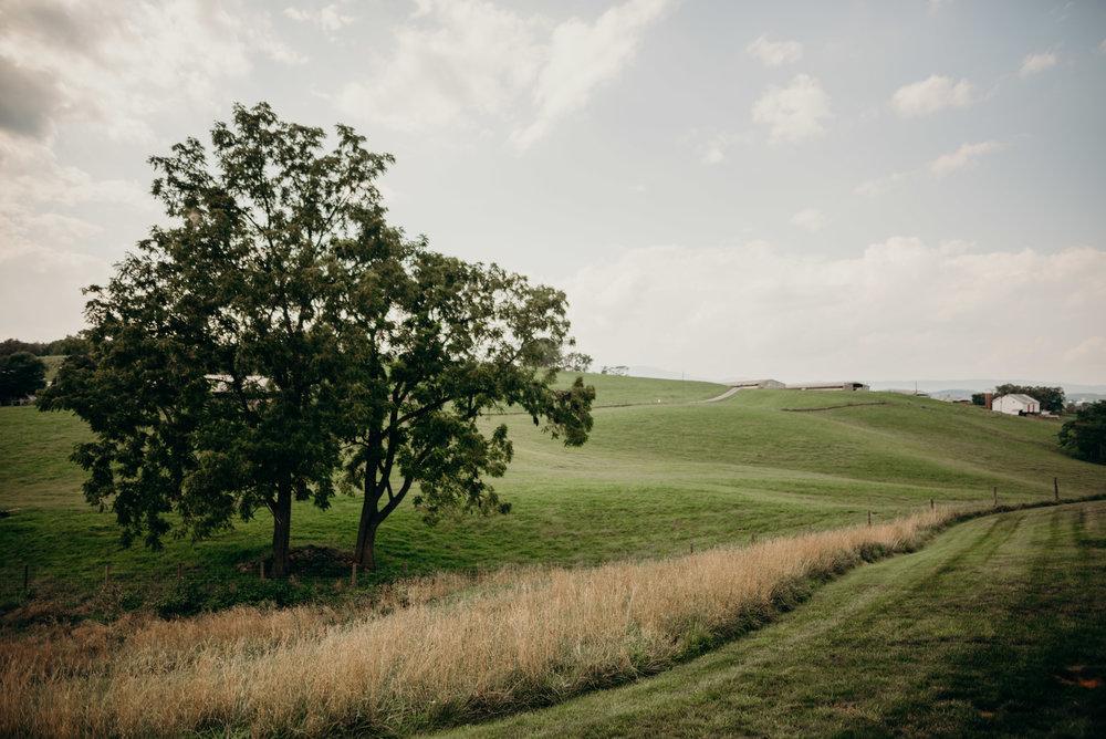on-sunny-slope-farm-harrisonburg-wedding-virginia-9218.jpg