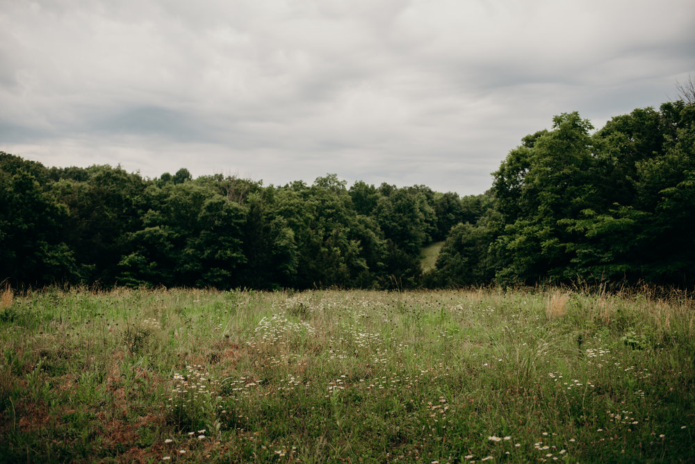 Kentucky field