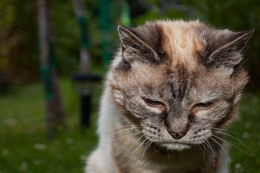 A sick cat.