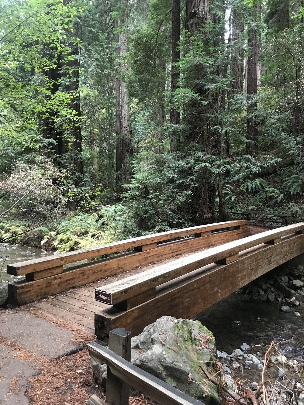 muir woods 3.jpg