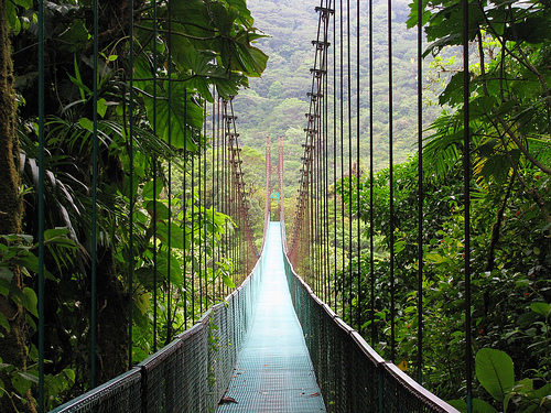 Jungle Bridge.jpg