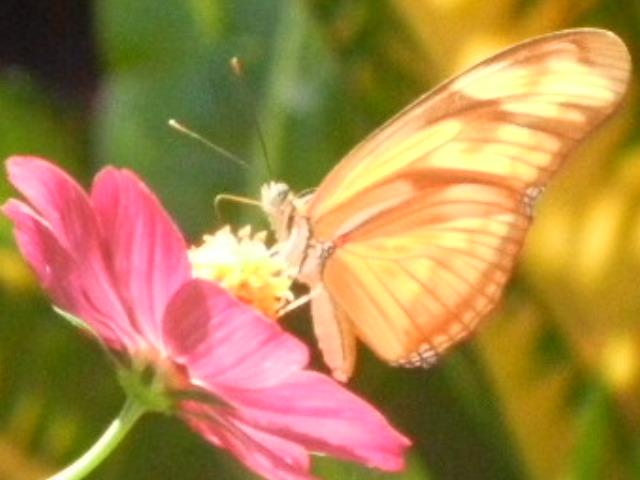 Butterfly - Eden Atenas garden