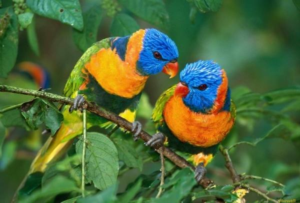 CR birds.jpg