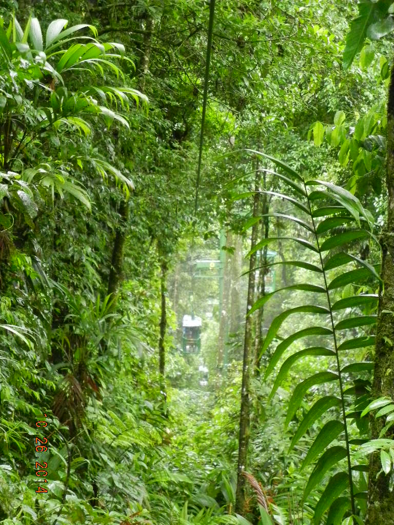 Rain Forest Tour_0009.JPG