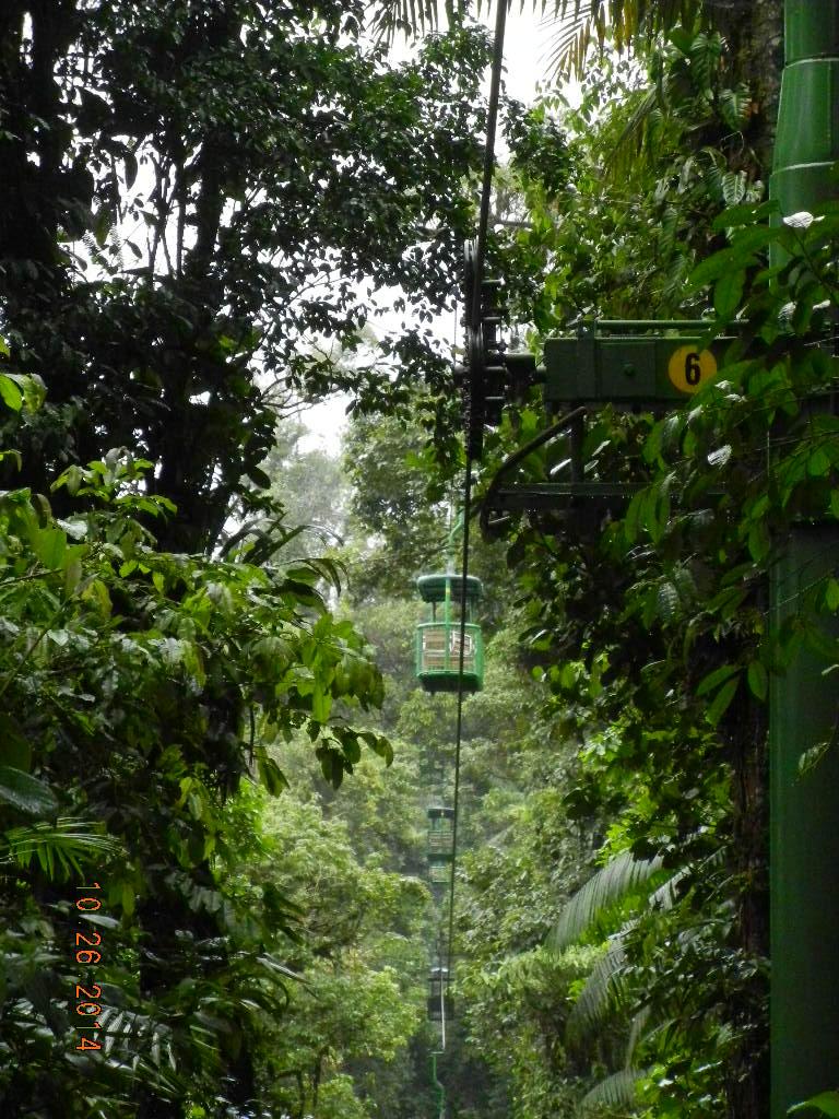 Rain Forest Tour_0011.JPG