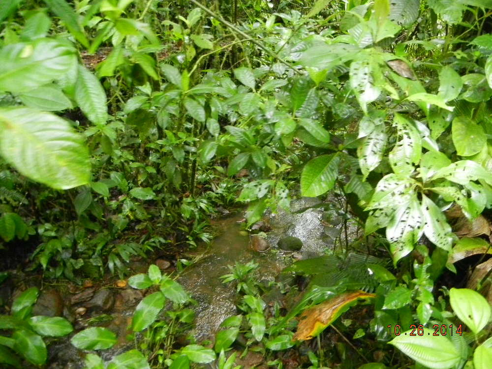 Rain Forest Tour_0010.JPG