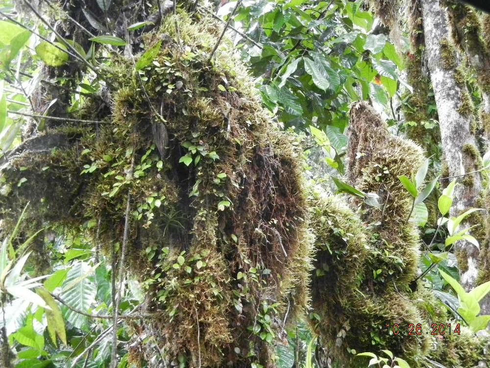 Rain Forest Tour_0019.JPG