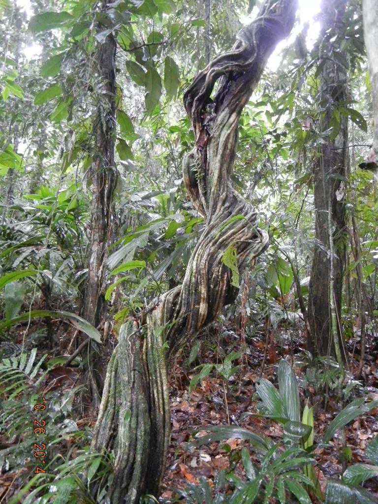 Rain Forest Tour_0023.JPG