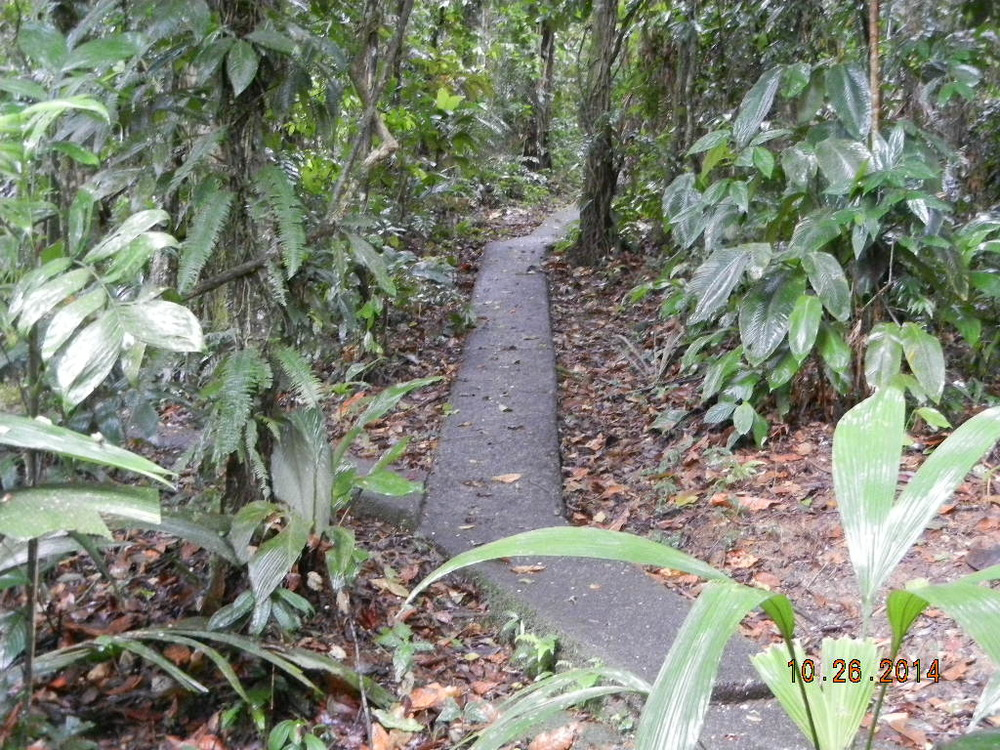 Rain Forest Tour_0032.JPG