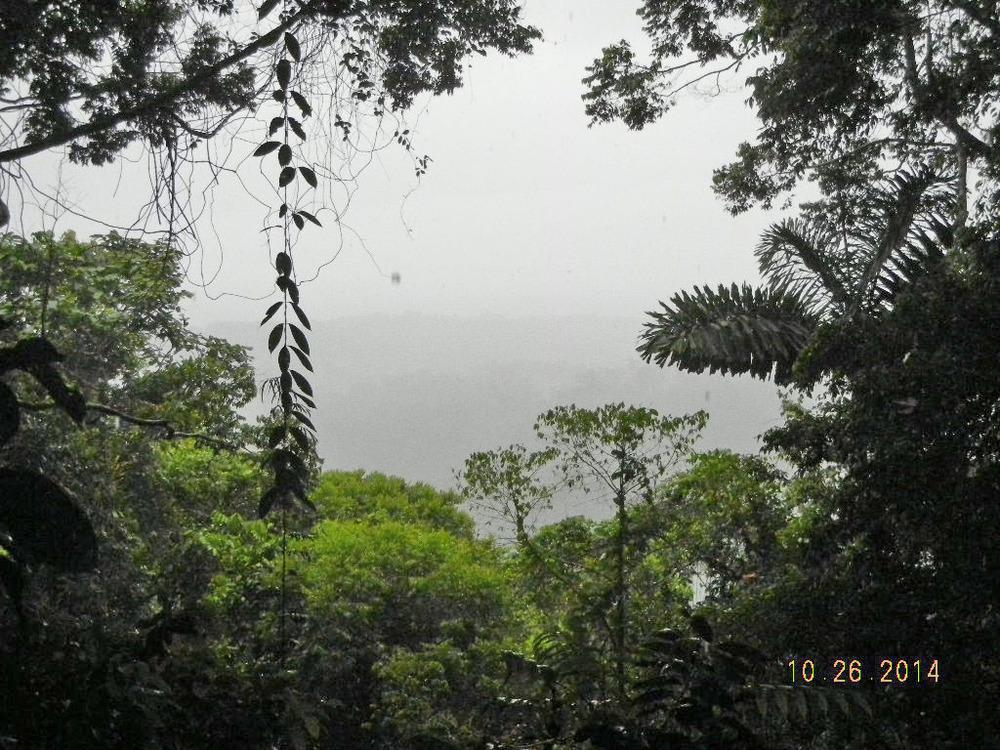 Rain Forest Tour_0024.JPG