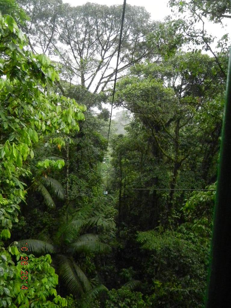 Rain Forest Tour_0034.JPG