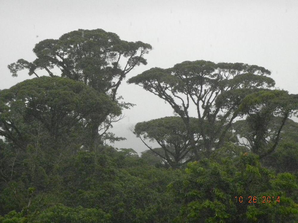 Rain Forest Tour_0039.JPG