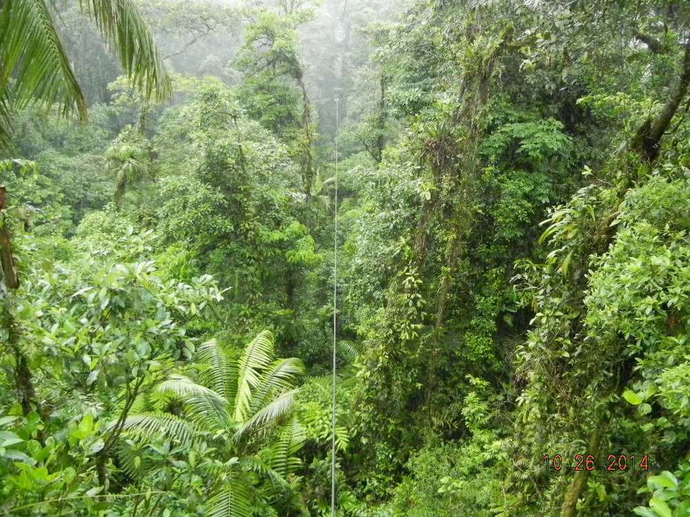Rain Forest Tour_0058.JPG