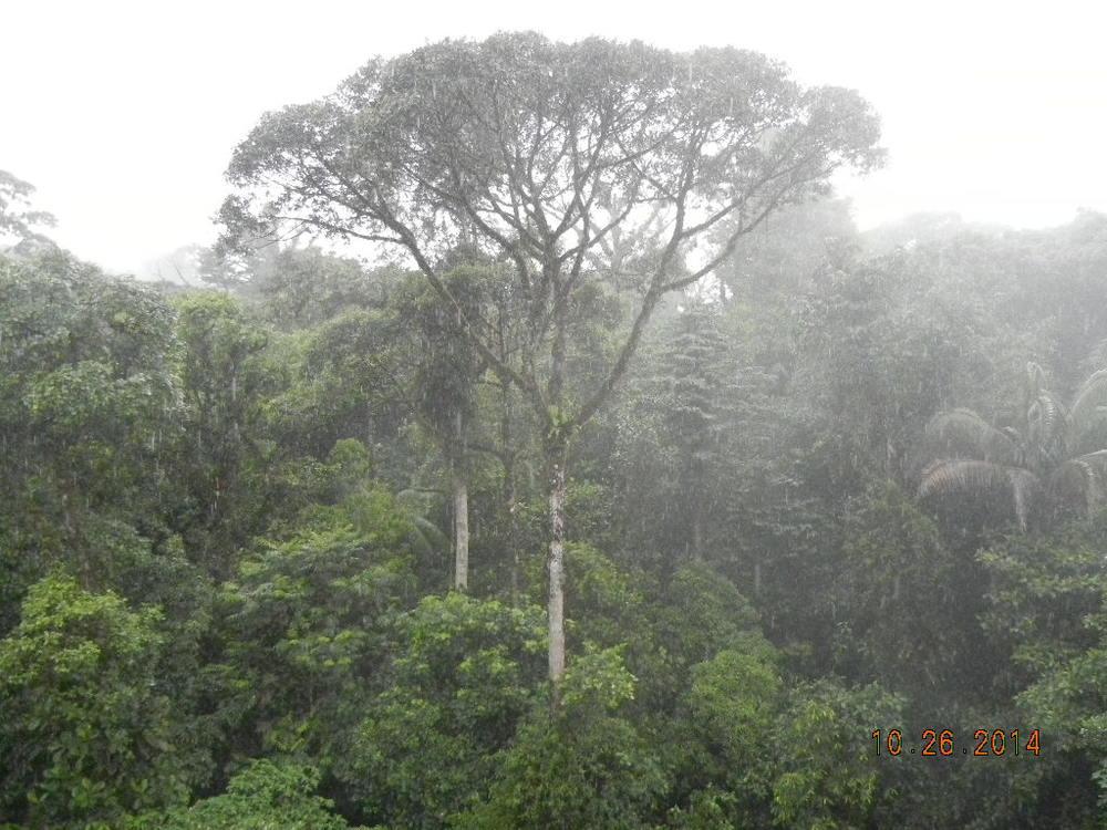 Rain Forest Tour_0061.JPG