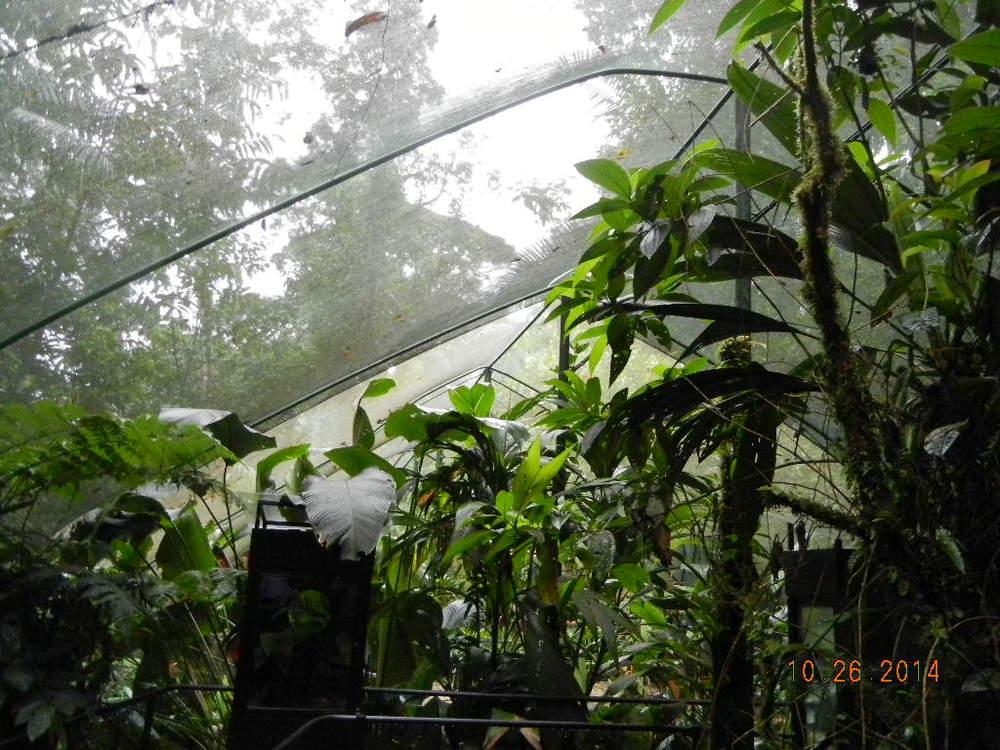 Rain Forest Tour_0098.JPG