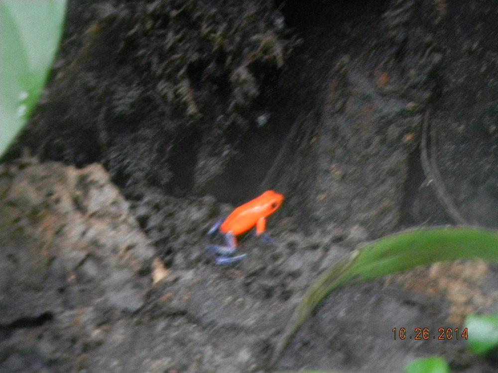 Rain Forest Tour_0102.JPG