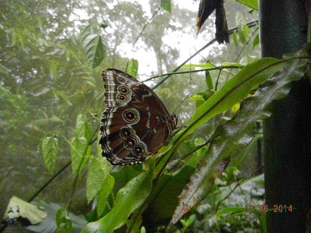 Rain Forest Tour_0107.JPG