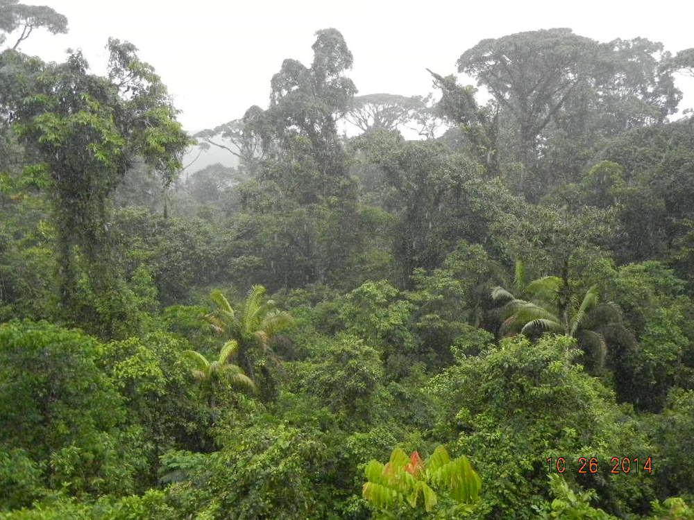 Rain Forest Tour_0042.JPG