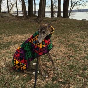 Greyhound - Nina