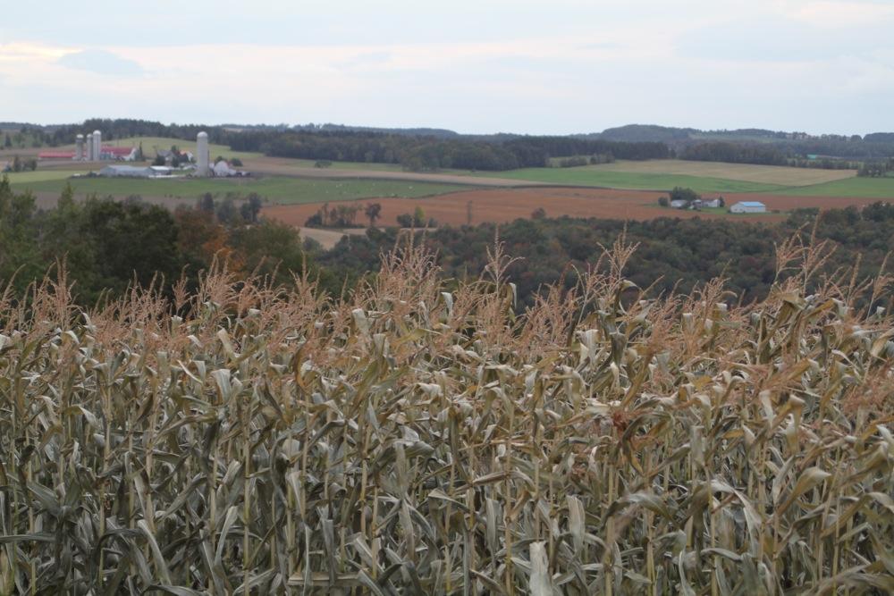 compton_cornfields.jpg
