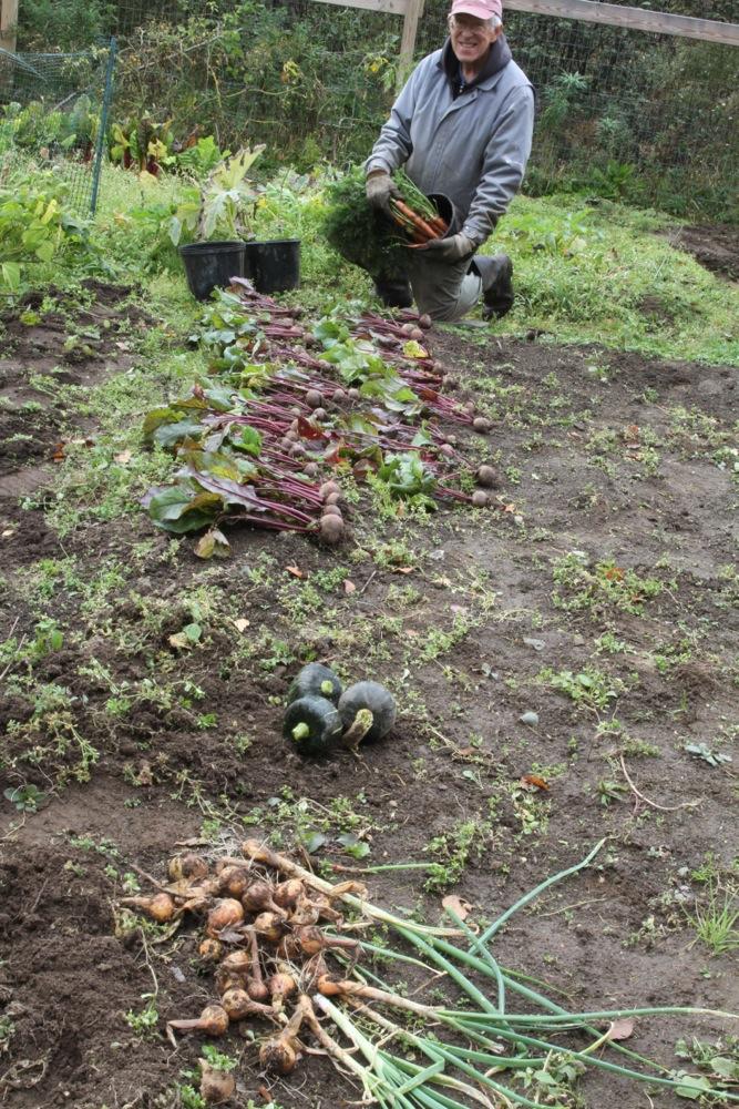 ray_harvesting_veggie_garden_2014.jpg