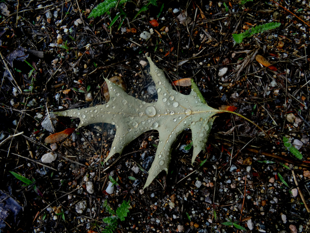 leaf-rain-droplets-great.jpg