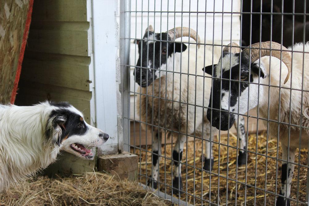 conversation-lilybrook-farm-slessardphoto.jpg