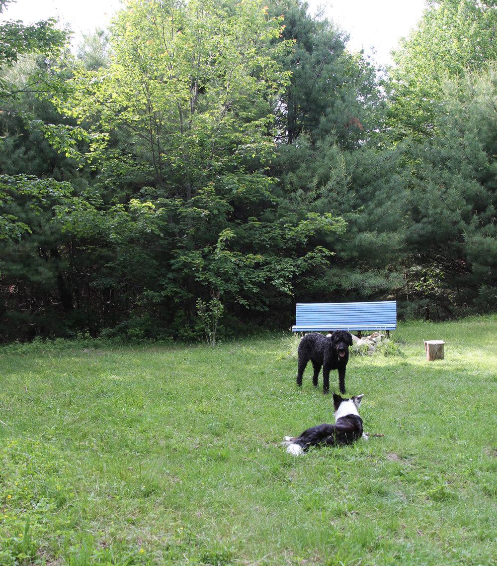 conversation-pups-slessardphoto.jpg