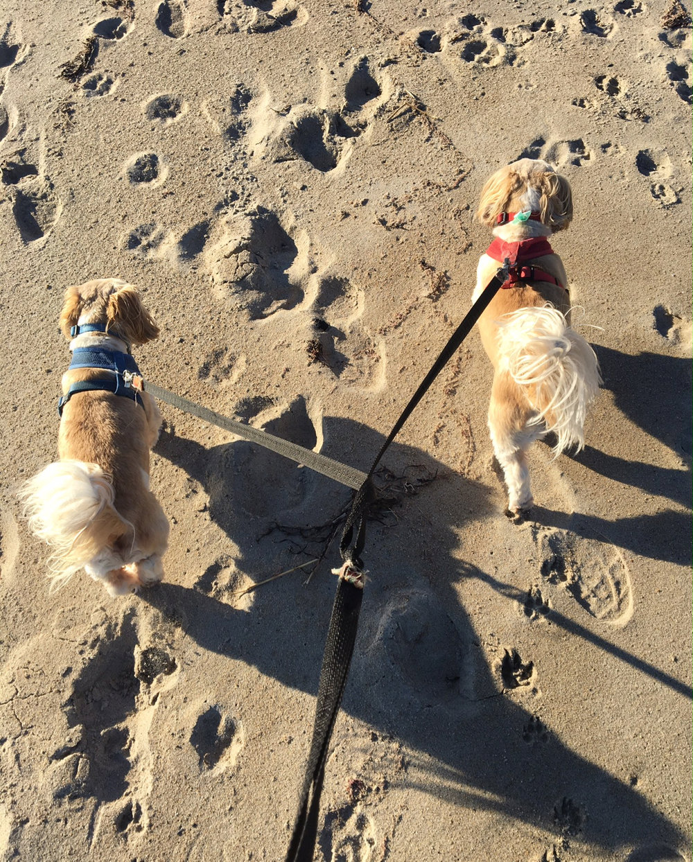 dogs-beach-routine.jpg