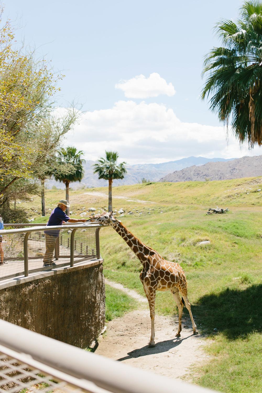 Palm Springs-14.jpg
