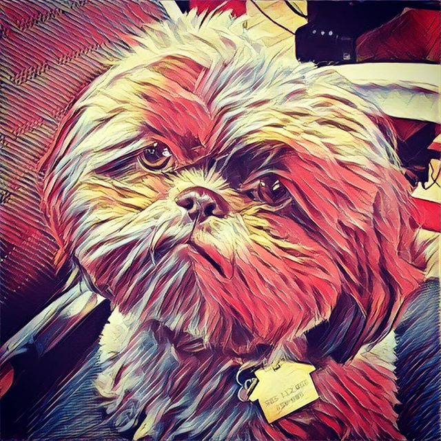 Business by Charlie tip of the day: commission an oil painting of yourself for your office. Make sure to look stern so it seems like you're watching them even when you're not there #businessbycharlie #dogwork #toughboss ✏️ 🌎