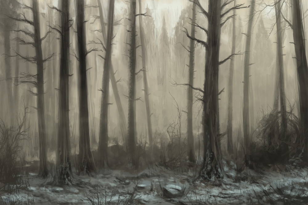 15_Foggy_Forest.jpg