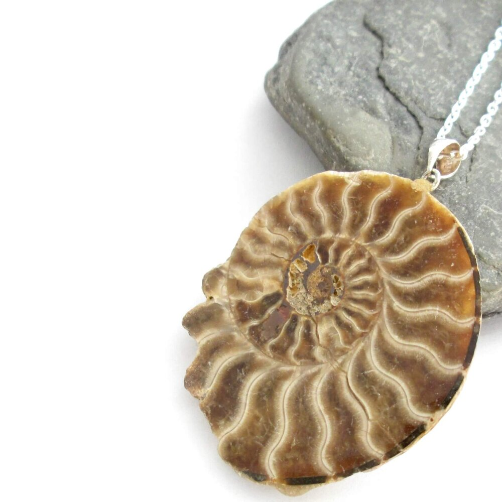 Fossil Ammonite Pendant Necklace