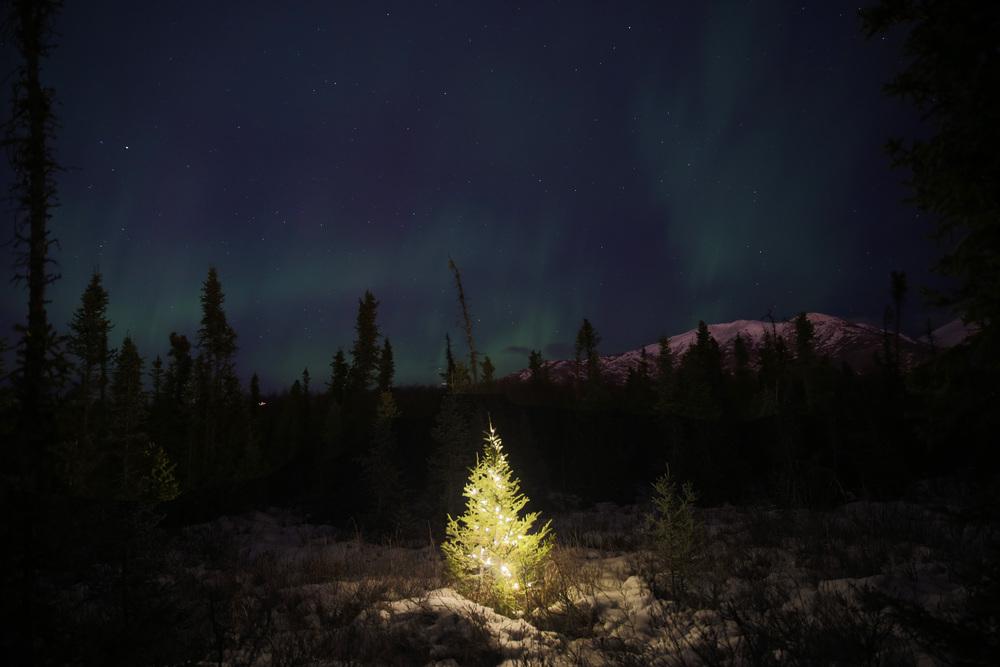 Aurora Christmas print.