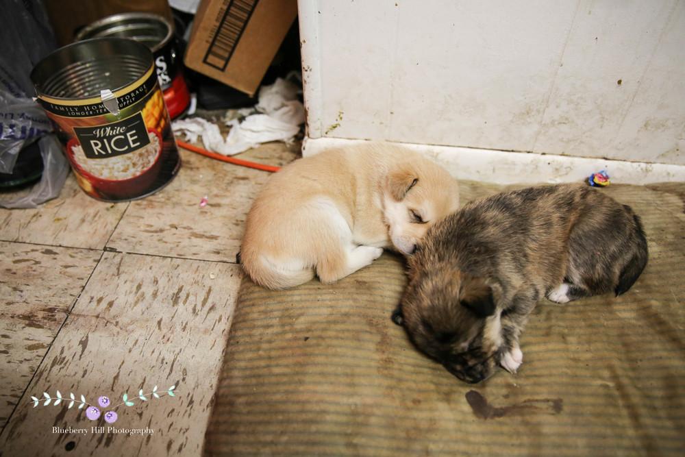wales puppies-14.jpg