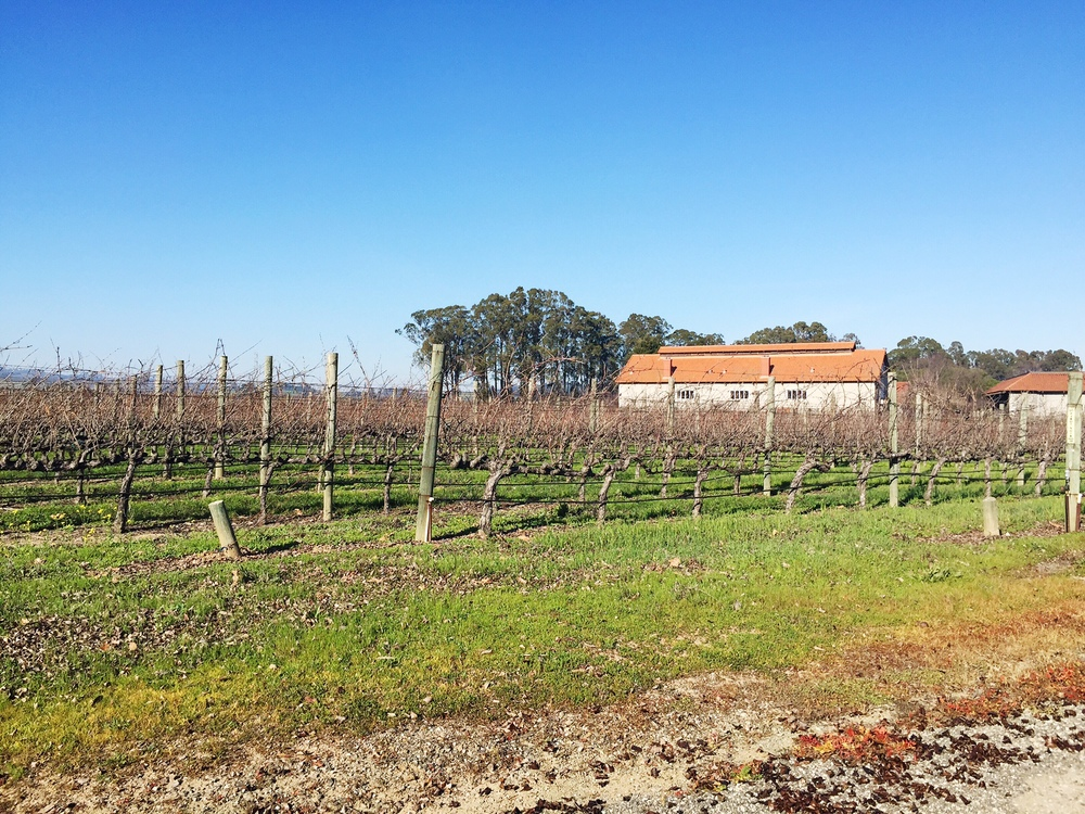 Some of the vineyards at Etude.