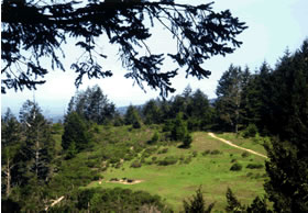 Sky trail overlook at Point Reyes with trees and open meadow