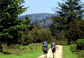 Two hikers with backpacks walking on dirt path in a lush meadow against blue sky
