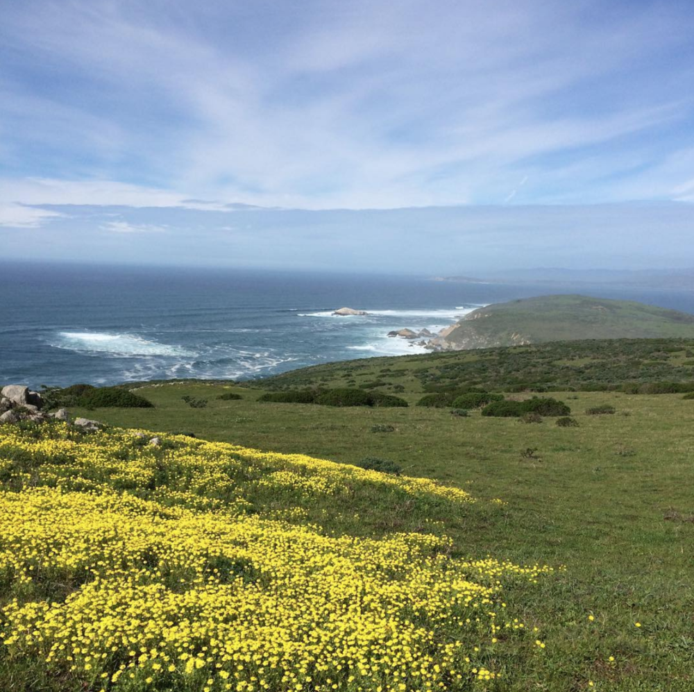 Green grass with yellow flowers against blue sky and ocean with waves